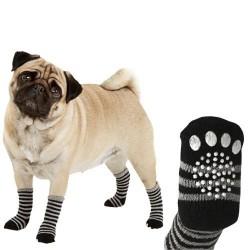 Chaussettes pour chien...